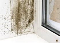 Riješite se vlage i buđi u domu
